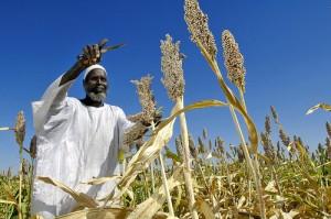 Agricoltori africani