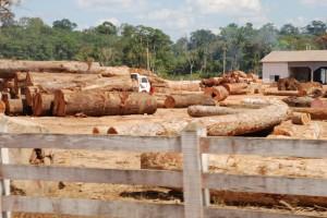 Taglio illegale di legname, foto di Joelle Hernandez su Flickr, licenza CC.