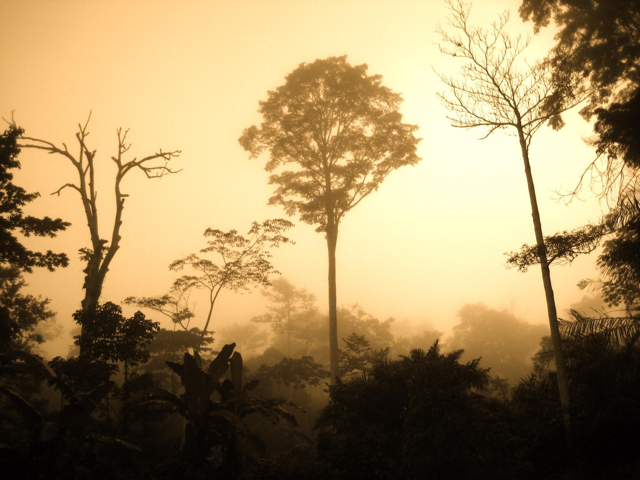 Foresta pluviale nel Bacino del Congo, foto di Corinne Staley su Flickr, licenza CC.