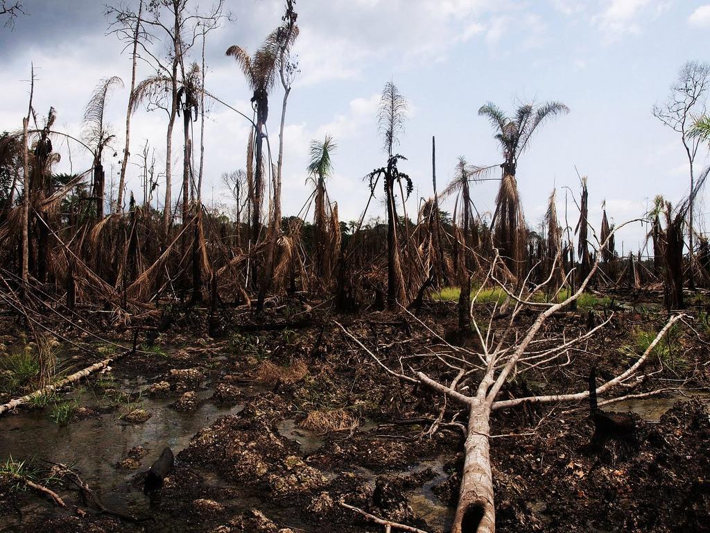 Foto dell'utente di Flickr Sosialistik Ungdom (SU). Disastro petrolifero nel Delta del Niger (2010) Licenza CC.