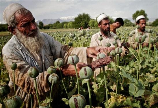 La nuova guerra dell'oppio, immagine tratta da Combonianum.org