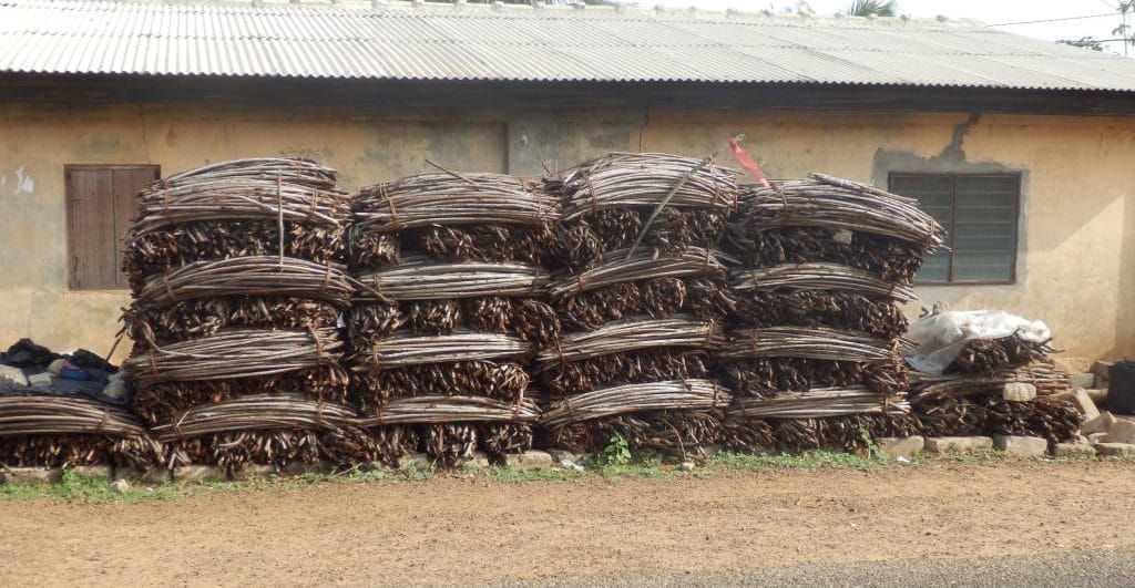 Legno di mangrovie nell'area di Dzita. La gente del posto è inconsapevole dei danni lungo la costa che provoca tagliare questi fusti
