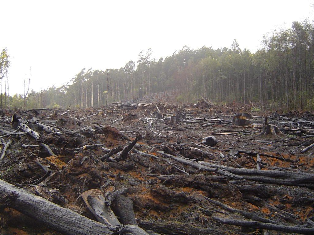 Deforestazione, 2006. Immagine ripresa da Flickr/Crustmania in licenza CC. Alcuni diritti sono riservati.