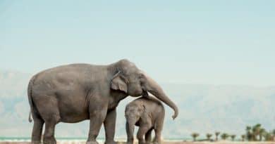 Elefanti che piangono, topi che ridono. La forza dei sentimenti