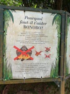 Riserva dei Bonobo a Kinshasa: l'obiettivo è anche quello di scoraggiare il consumo di carne di bonobo da parte della popolazione locale