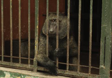 Nel cuore dell'Africa l'agonia di animali, parchi e riserve