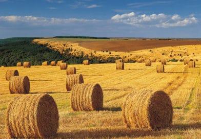 Qualità del cibo, reazioni/adattamenti ai cambiamenti climatici