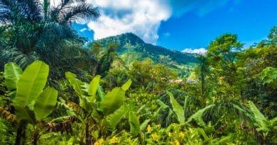 Madagascar, un patrimonio naturale a rischio di estinzione