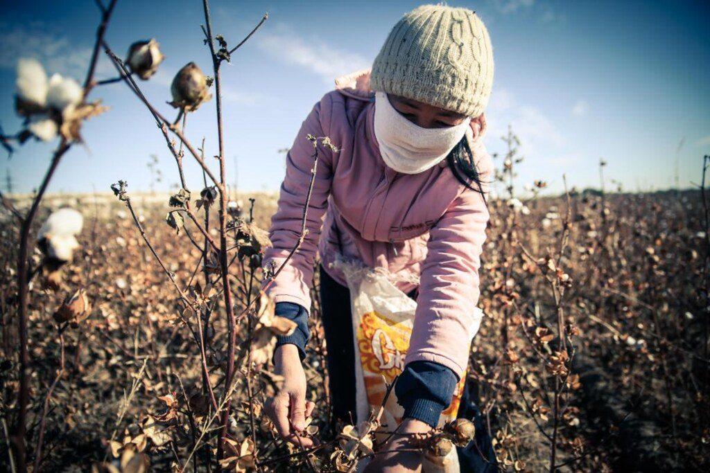 Lavoratori sfruttati nella raccolta del cotone in Uzbekistan - Flickr Creative Commons - Simon Buxton