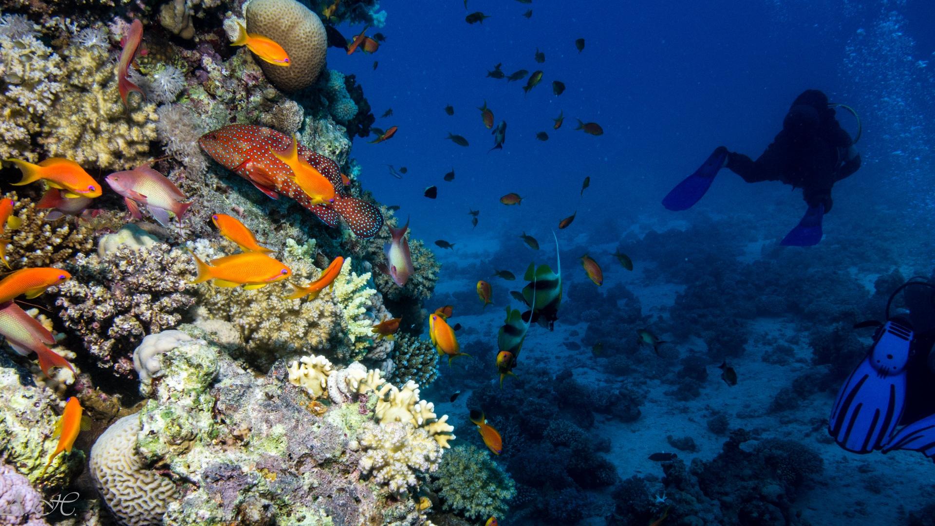 La barriera corallina del Mar Rosso. Fotografia di ©DavidFlint4, (CC)
