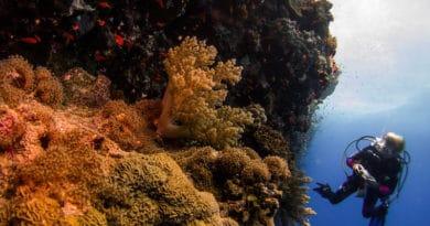 Ambiente, la resilienza del Mar Rosso al cambiamento climatico