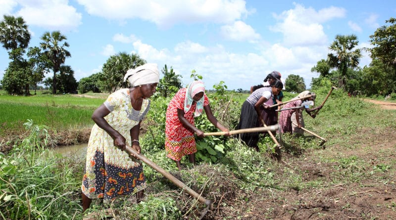 Donne al lavoro nei campi in Sri Lanka. Fotografia: Lakshman Nadaraja/World Bank