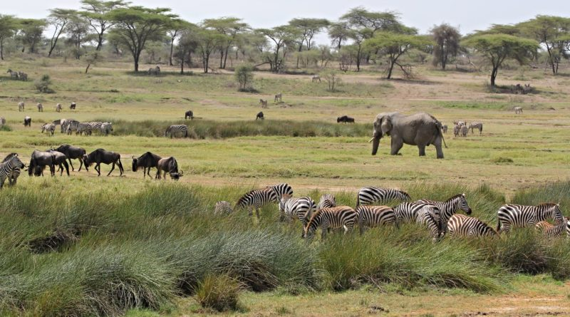 Safari in poltrona, tour virtuali  in Africa tra elefanti, gorilla, leoni