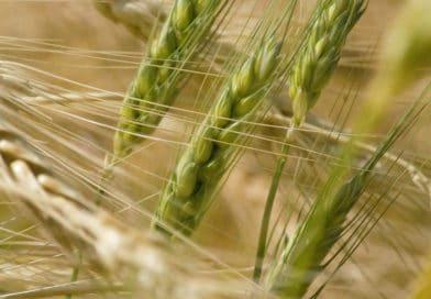 In Africa l'agricoltura è la chiave di volta per crescita e sviluppo