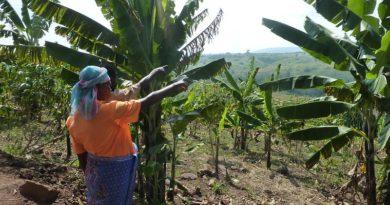 Uganda, ecofemministe in lotta contro l'industria petrolifera