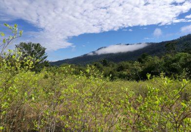 Colombia, cocaleros e ambientalisti contro l'uso del glisofato