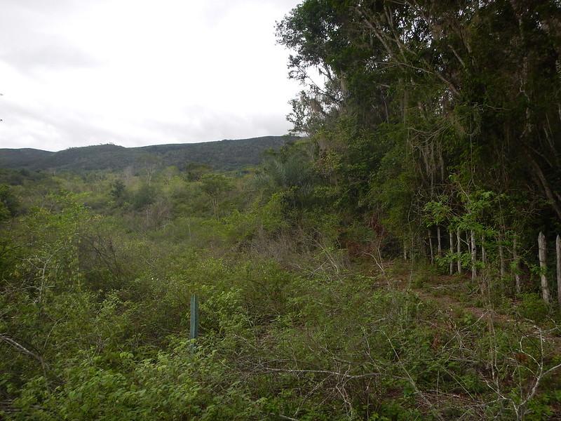 Contrasto tra un tratto residuo di foresta primaria dominata da Goniorrhachis marginata e, a sinistra, la ridotta statura della foresta secondaria che l'ha sostituita. Foto dell'utente Flickr Matt Lavin su licenza CC.